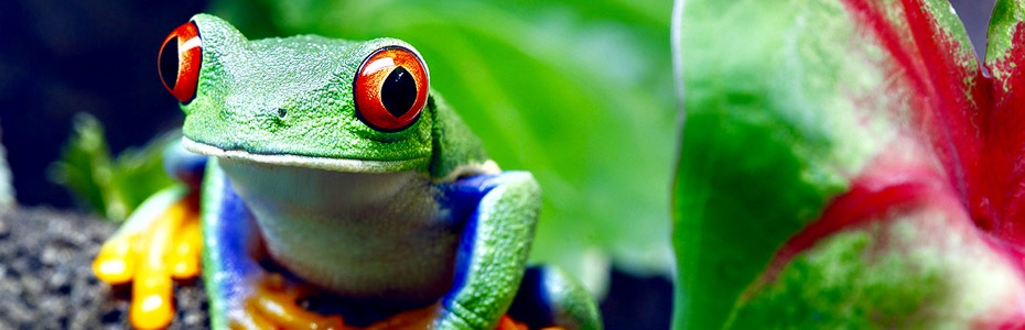 Costa Rica, avantura kroz 4 nacionalna parka